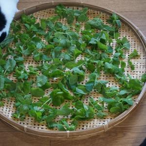 ミントの葉