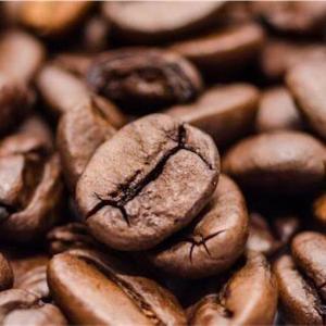 コーヒーの原種を知る