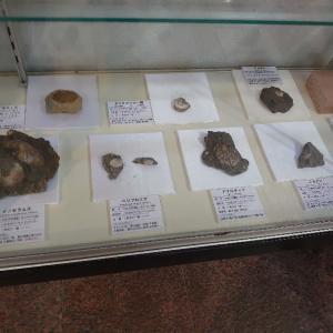 いわき市 いわき市アンモナイトセンター 2 化石など。