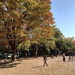 朝霞市 秋を探しに青葉台公園に行く。