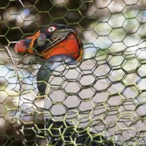ベリーズ 動物園で見る身近な鳥たち