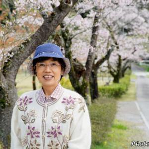 日本 背景は畜産センターの桜