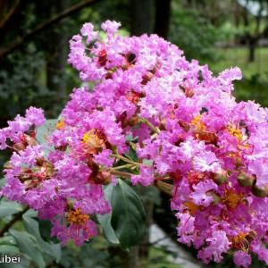 日本 9月15、16日の文殊の森公園