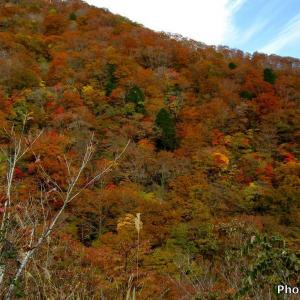 日本 温見峠の紅葉