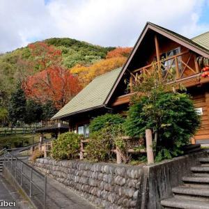 日本 文殊の森公園の秋