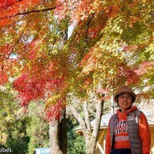 日本 本巣市の淡墨公園の紅葉