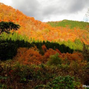 日本 本巣市大河原の紅葉