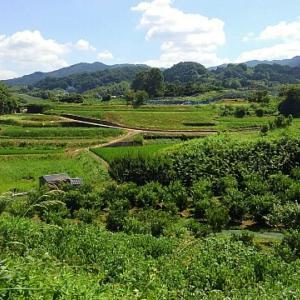 明日香村の観光コース初心者はレンタサイルにすれば良かった