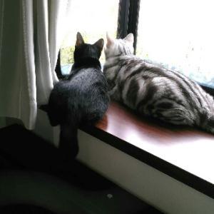 生き生き60代猫との暮らし