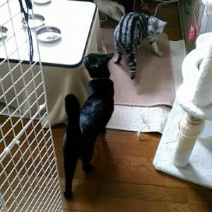 猫と巣ごもり