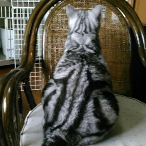 猫のブラシ