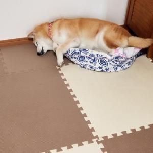 熟睡中でもカサカサ音に反応するクリン