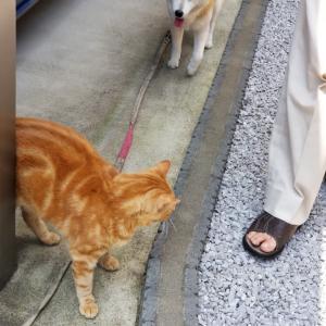 暑くても昼散歩~