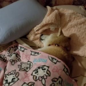 お疲れ休みの日