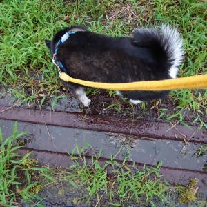 お散歩途中で土砂降り
