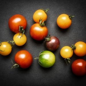 【家庭菜園】プチトマトを種からと苗からで栽培。