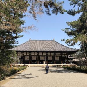 【お出かけ】奈良 奈良公園の鹿たち