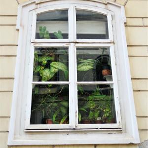教会のグリーンカーテン 窓のある風景|クロアチア-ザグレブ