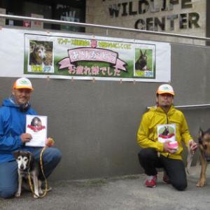 【働く犬】お疲れさま!「マングース探索犬」のタワ(生体探索)、ユウキ(ふん探索)が引退/奄美大島