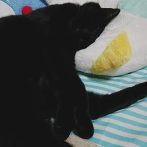 【画像】ワイネッコ、ご主人の枕でスヤスヤタイム