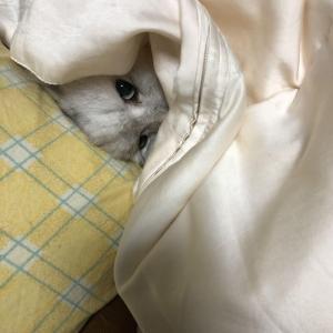 【画像】猫いつも足元で寝てたんだけど