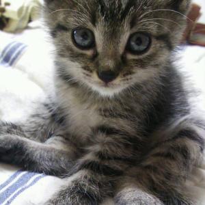【画像】子猫拾ったったwwwwwwwwww