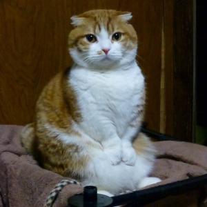 【画像】オス猫甘えんぼすぎワロタwwwwwwwwwwwwwwwwww