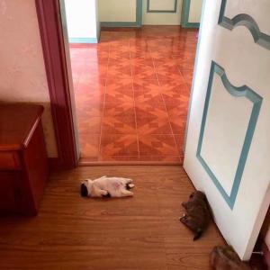 【画像】仰向けで寝るイヌ、発見