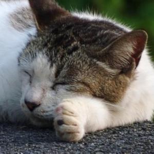【画像多】猫島(笠戸島)逝ってきたンゴ4