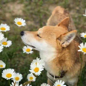 【画像】イッヌ、お花にうっとり