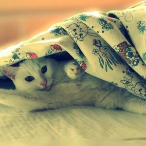 【画像多】美し可愛い!綺麗すぎ!!猫画像集30