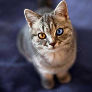 【画像多】美し可愛い!綺麗すぎ!!猫画像集31