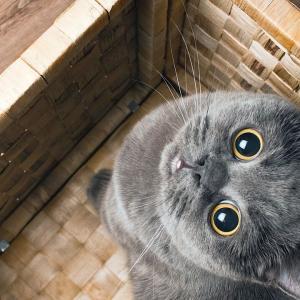 【画像多】美し可愛い!綺麗すぎ!!猫画像集35