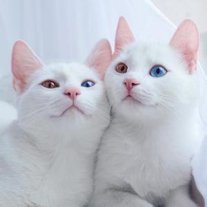 【画像】この猫の画像wwwwwwwwwwwwwwwwwwwwwwwwwwwwwwwwwwwwwwwwwwwwwwwwwwwwww
