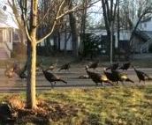 【動画】ヒェッ・・・何かの儀式みたい・・・鳥が延々と回ってる・・・
