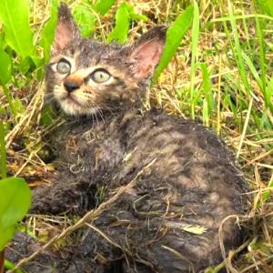 【動画】子猫がネズミ取りに引っかかっていた所を救出する動画が俺の中で話題に