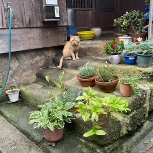 【画像】写真を撮られた猫ちゃん、この表情