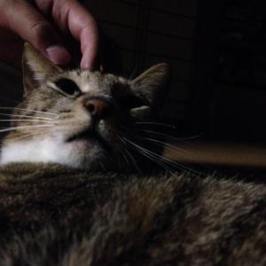 【画像】俺の飼ってる猫ワロタwwwww