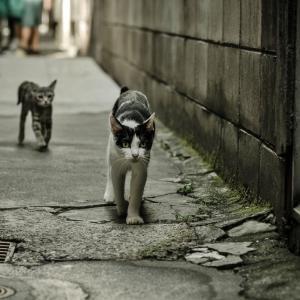 【画像】美し可愛い!綺麗すぎ!!猫画像集121