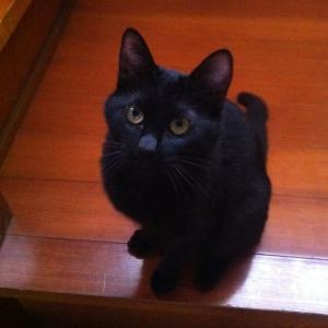 【画像】うちの猫さんが