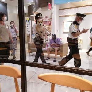【画像】イッヌさん、逮捕される【悲報】
