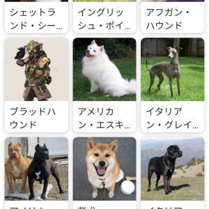 【画像】犬の種類を調べてたら明らかに変なのあってワロタ