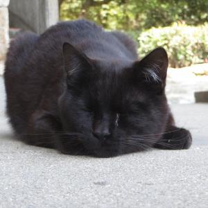 【画像多】撮り貯めた猫画像貼っていく13