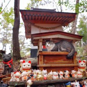 【画像】雨宿りする猫が神秘的だった…