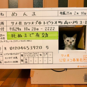【画像】猫がいつもダンボールから顔出してるので免許証にしてやりました。