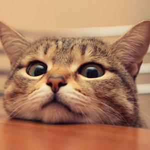 【画像】猫の画像・・・貼るにゃ !