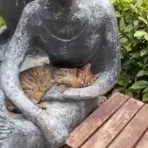 【動画】銅像に抱かれる猫、代わりに抱っこしてあげたい