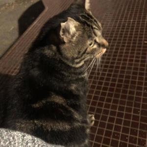 【画像】キジトラのネコが1番かわいい。わかるヤツおる?