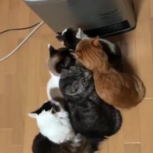 【動画】猫がコタツで丸くなる時代は終わった wストーブの前で猫団子www