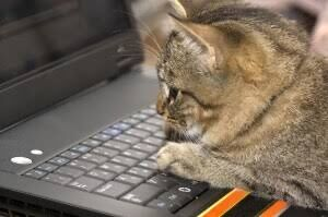 ワイ「何が『猫でもできるプログラミング』だよ!?難しいじゃねえか!(ポイッ」野良猫「にゃあ?」